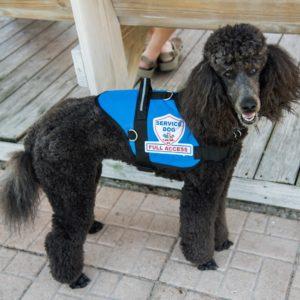 Padded Premium Service Dog Vest